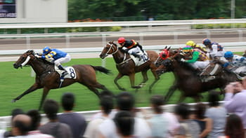 Horse Race Betting Online