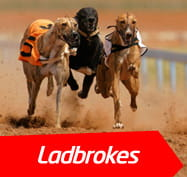Shawfield dogs betting calculator bbc 18 betting shops in ireland