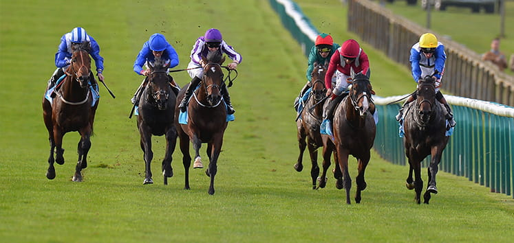Horses racing at the dewhurst stakes feature image
