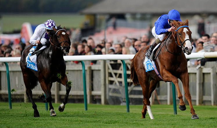 Horses racing in the dewhurst stakes main image