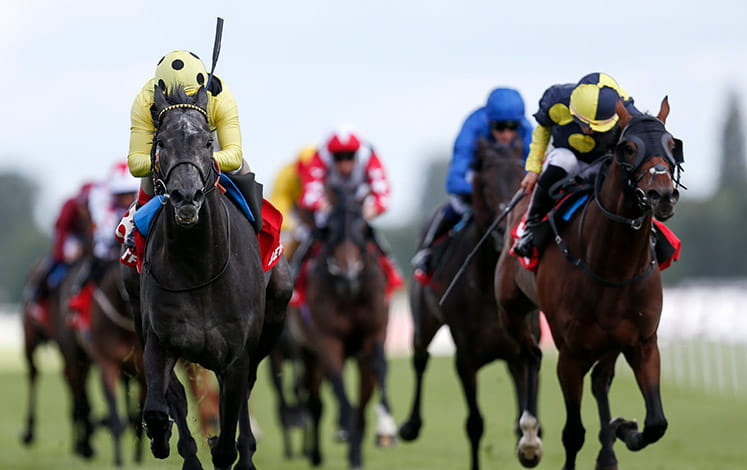 Five horses running at Newbury racecourse. Main image.