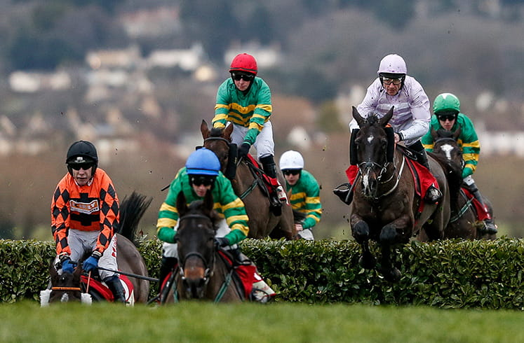 Horses jumping the hurdle at Cheltenham