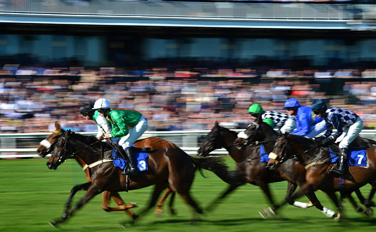 Horses racing to the finish in the Scottish Grand National