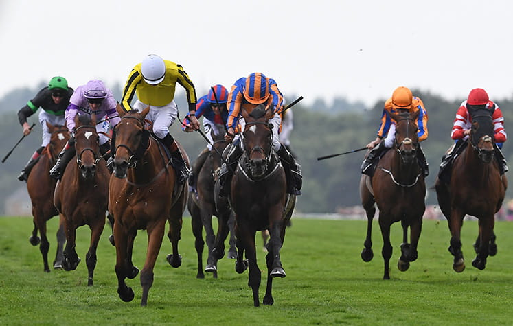7 horses running at Royal Ascot