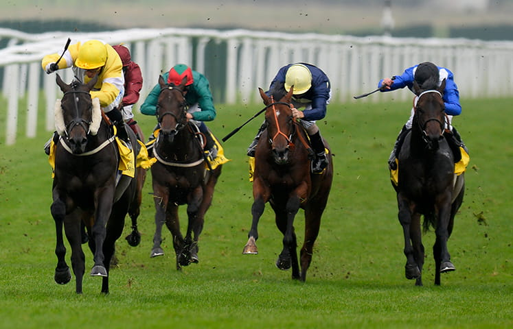 Five horses running at the Sky Cup