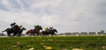 Long shot of horses at Newbury