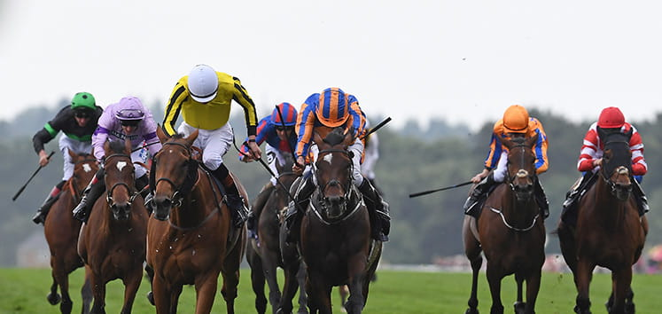 Horses racing head on at Cumberland Lodge Stakes