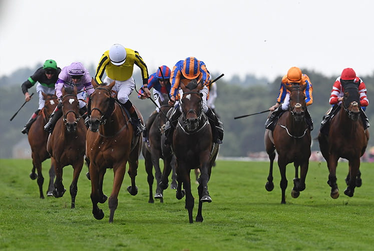 A long shot of horses at the Cumberland Lodge Stakes