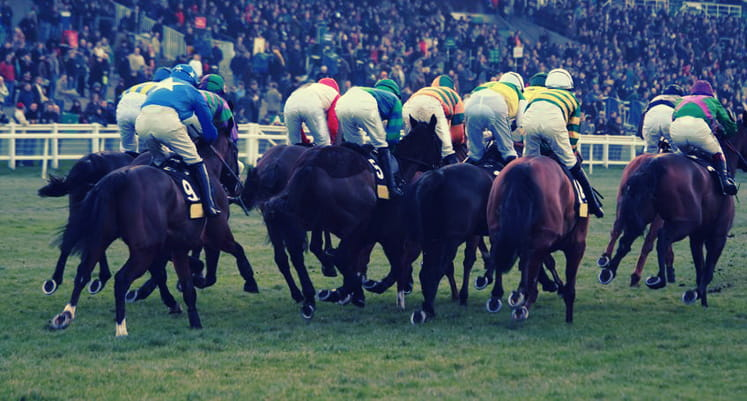 Rear view of horses at Sandown