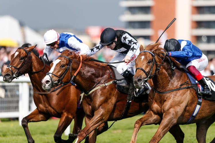 Four horses racing to the finish at Newbury