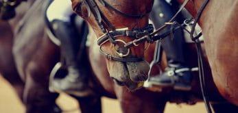 Close up of a horse at Ayr