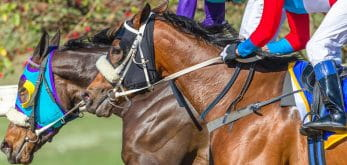 horses close-up