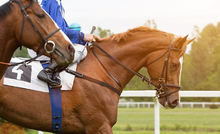 kuda di jalurnya