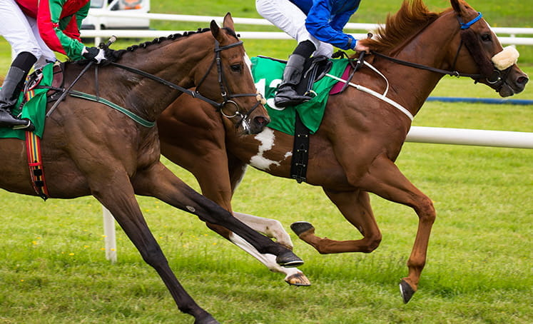 kuda closeup