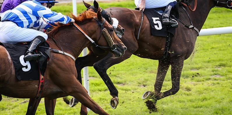 kuda berjalan di jalurnya