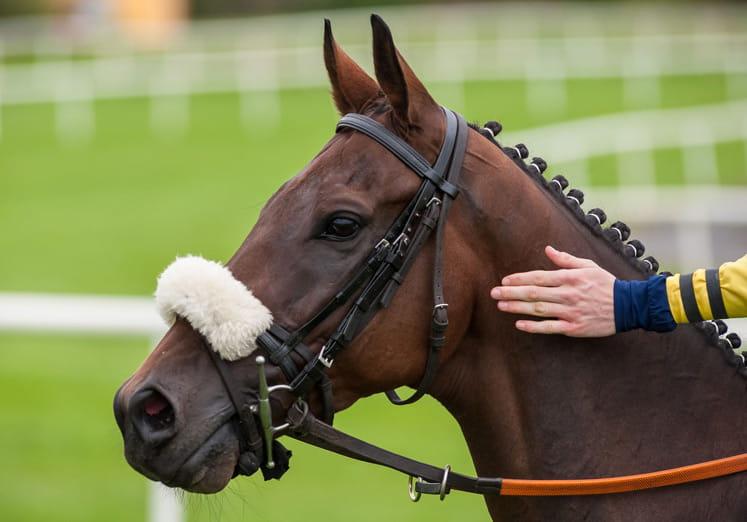 kuda close-up