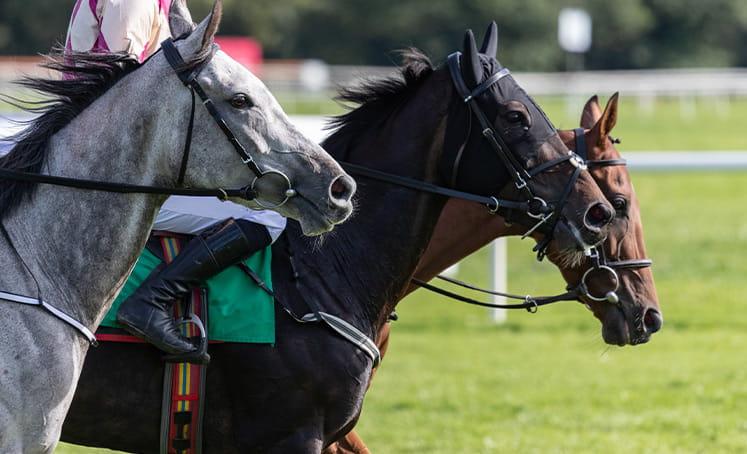 dua pacuan kuda