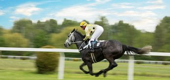 horse on track