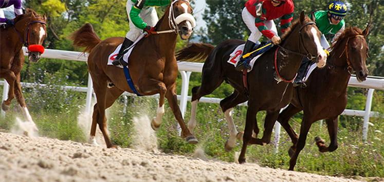 horses on track