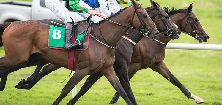 horses and jockey