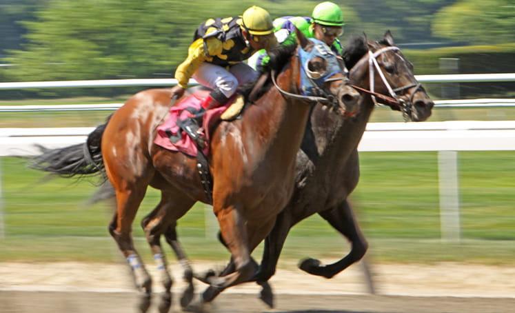 kuda berlari di jalur