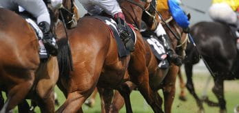 horses racing together